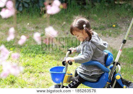 Japanese Girl Riding On The Tricycle (2 Years Old) And Cherry Blossoms