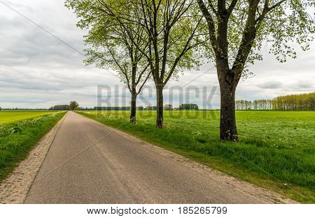Trees with fresh young green budding leaves next to a seemingly endless country road in a Dutch polder landscape on a cloudy day in the spring season.