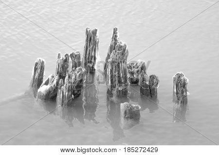 Daytime  black and white stock photo of remnants of icy wooden pylons protruding from Lake Erie in Buffalo, New York in Erie County. poster