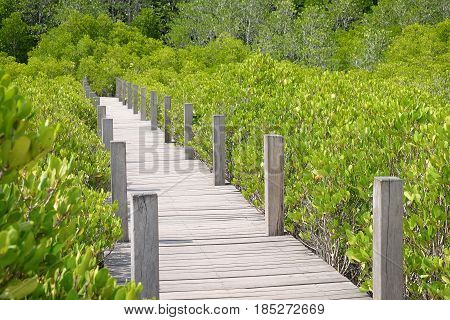 Wooden bridge at Tung Prong ThongGolden Mangrove FieldPra Sae Rayong Thailand.