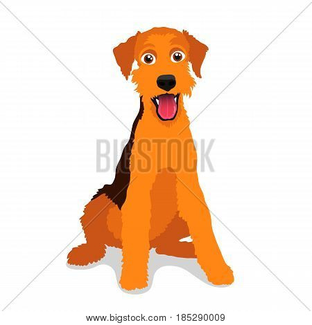 Cute dog - Airedale Terrier breed. Vector illustration on a white background. Friend of human. Symbol of the new year 2018.