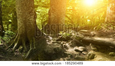 Old forest at sunset in the bright sun