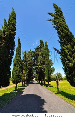 Straight single lane road with vanishing point between rows of tall cypress trees in the countryside of Italy