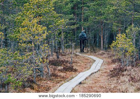 Unrecognizable traveller on hiking trail of Kakerdaja bog Jarva county Estonia