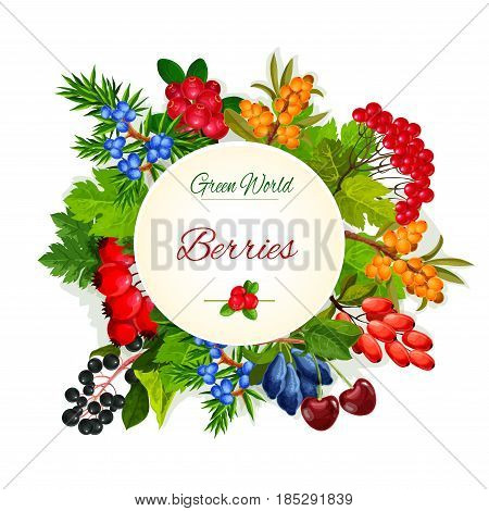 Wild berries and wildberry fruits vector poster of garden buckthorn, honeysuckle or cranberry and rowanberry. Forest harvest fruits of ashberry, wild barberry and juicy blackberry or blueberry