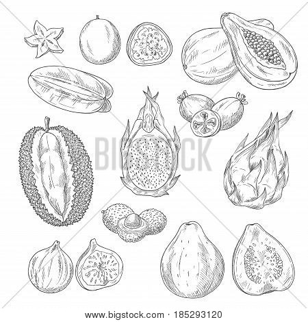 Exotic fruits vector sketches. Papaya and mango, passionfruit maracuya and carambola, durian or figs, juicy guava or avocado and feijoa, lychee and mangosteen. Set of whole and cut slice fruits