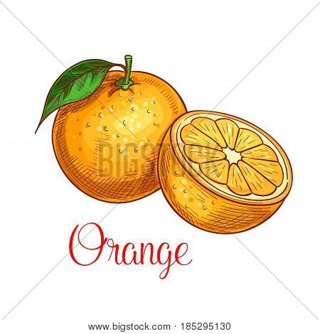 Orange fruit sketch. Vector icon of fresh citrus species with leaf. Sweet juicy whole and slice cut orange fruit symbol for jam and juice product label or grocery store, shop and farm market design