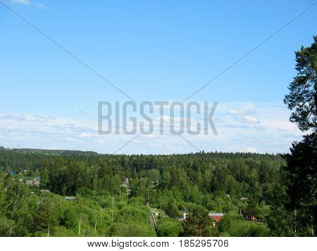 There are trees in a summer forest and sky