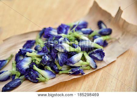 Pea Flowers, Clitoria Ternatea, Butterfly Blue. Asian Pigeonwings (clitoria Ternatea ) Prepare For B