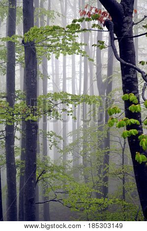 Foggy forest landscape in the spring morning