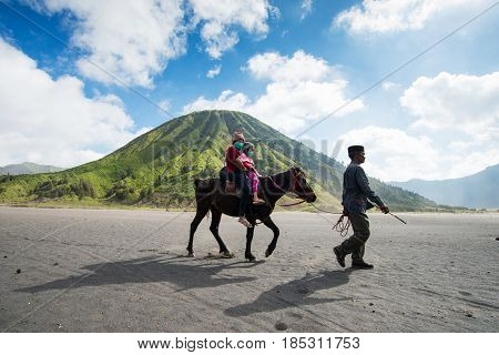 East Java,indonesia-may 05 : Tourists Ride The Horse At Mount Bromo, The Active Mount Bromo Is One O