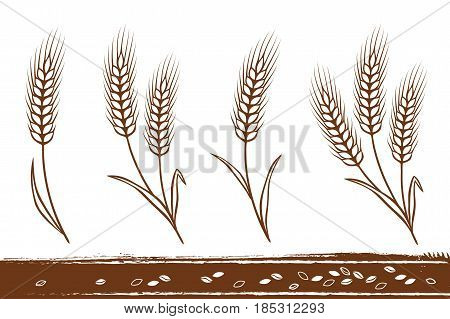 isolated hand drawn wheat ears silhouettes with grain