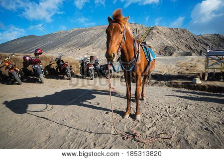 East Java,indonesia-may 05 :horse For Tourist Rent At Mount Bromo Volcanoes In Bromo Tengger Semeru