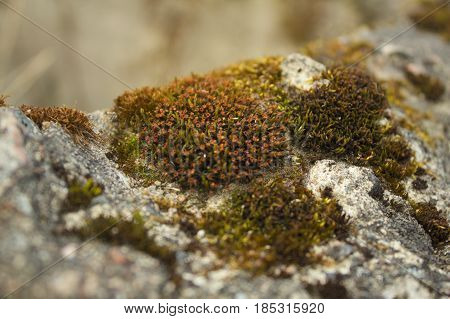 Small red flowers bloomed on the moss covering the stone