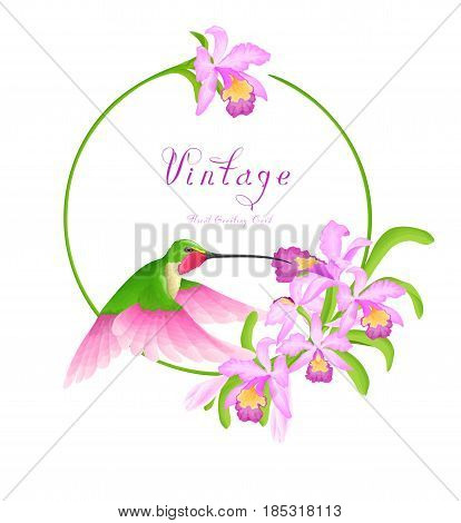 Hummingbird fly near orchid flowers. Floral circle frame isolated on white background.