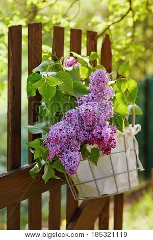 Lilac flowers in basket hanging on wooden garden fence. Bouquet of lilac decorating picket fence adjoining meadow.