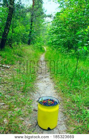 small can full of bilberries and wild strawberries on the forest path
