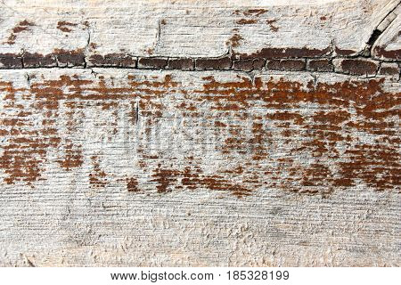 Boards a tree. Background texture. Photo for your design.