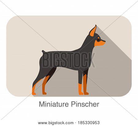 Miniature Pinscher Breed Flat Icon Design