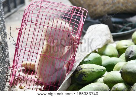 little baby monkey in a cage black market business of wildlife trafficking
