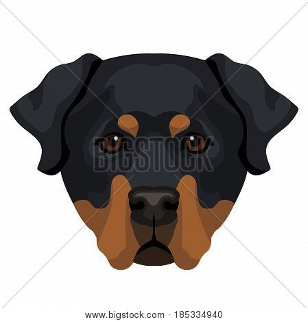 Vector rottweiler dog face zoo animal icon isolated on white background