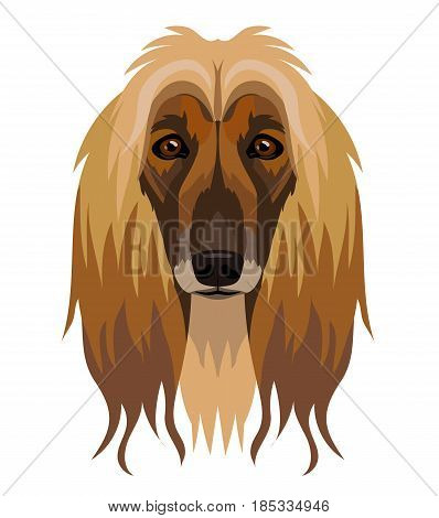 Vector beautiful Afghan hound dog breed portrait