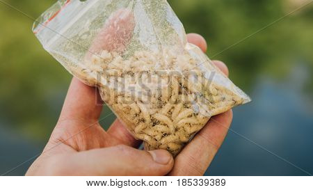 Close-up Worms Maggots For Fishing In The Package. The Package Of Worms For Fishing In The Hands Of