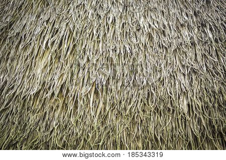 Texture and pattern of grasses thatch roof