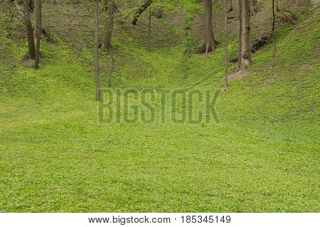 A beautiful green glade on a sunny day.