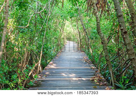 Wooden bridge and mangrove forest in thailand.