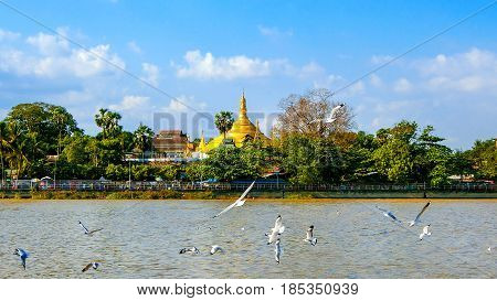 The gloden shwedagon pagoda Yangon in Myanmar.