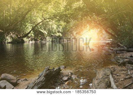 Deep tropical jungles with river in the jungle