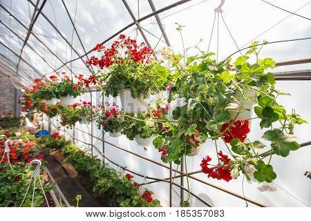 Flowers Garden Store