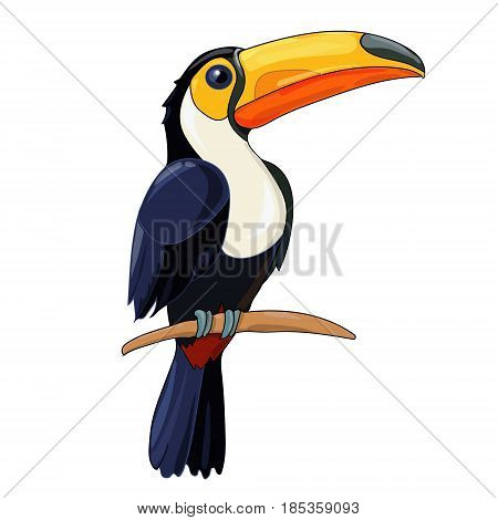 Toucan sitting on tree branch. Tropical birds.