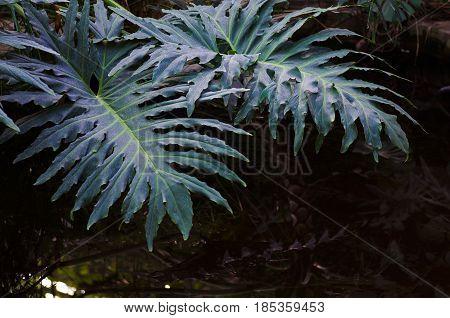Fern blue leaf macro on the water background