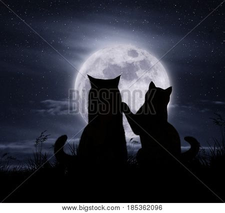 The two cats is sitting by moonlight.
