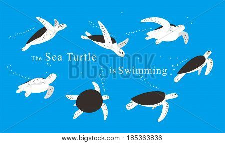 Sea Turtle Swimming In The Sea,vector