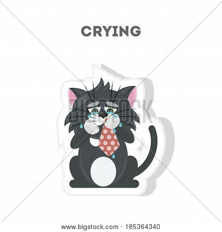 Isolated crying cat sits on white background.