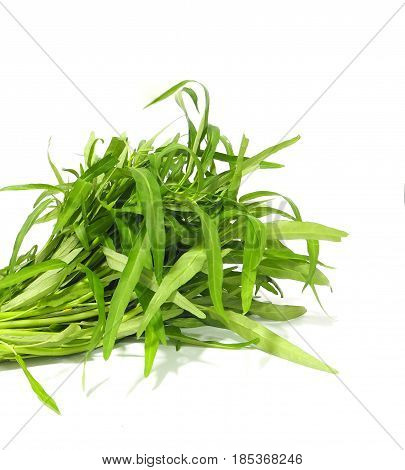 Green fresh morning glory on white background diet concept
