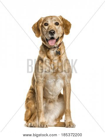 Mixed breed dog sitting and panting, isolated on white