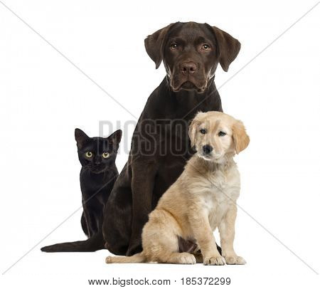 Cat and dogs sitting, isolated on white