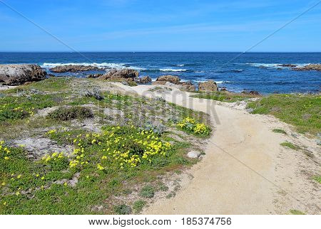 Walkway along the bluff with surf rocks and early spring wildflowers at Asilomar State Beach park on the Monterey Peninsula