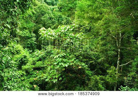 Tropical dense forest view, Taman Negara, Malaysia.