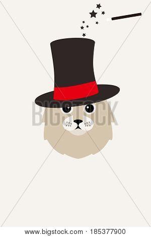 Fashion Portrait Of Cat, Magic Hat