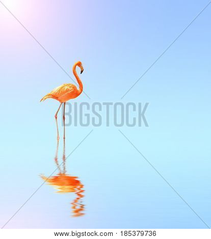 Flamingo on blue water on sunny sky background with reflection in water. Copy space for your text