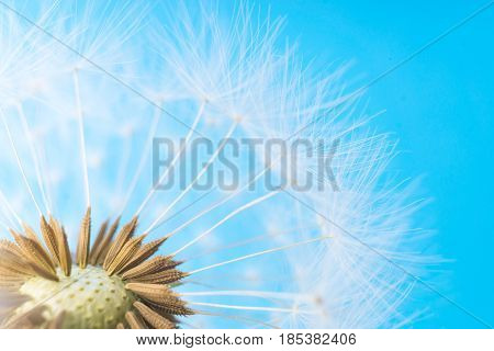 Dandelion abstract background. White blowball over blue sky. Shallow depth of field.