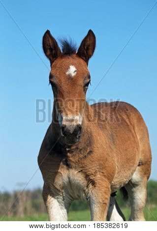 Foal portrait against the background of the blue sky