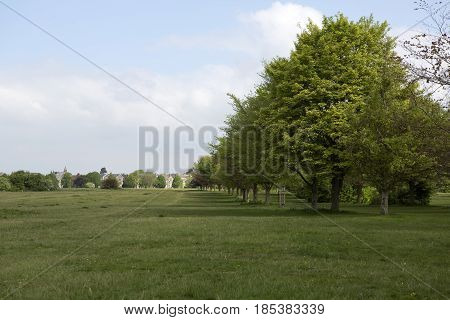 An avenue of trees on Durdham downs in Clifton Bristol the downs are 400 acres of open parkland attracting wlakers runners and events