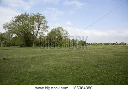 A view of trees on Durdham down Bristol