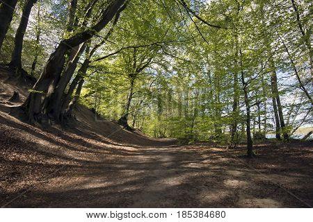 Beautiful pathway trough horizontal springtime beech forest